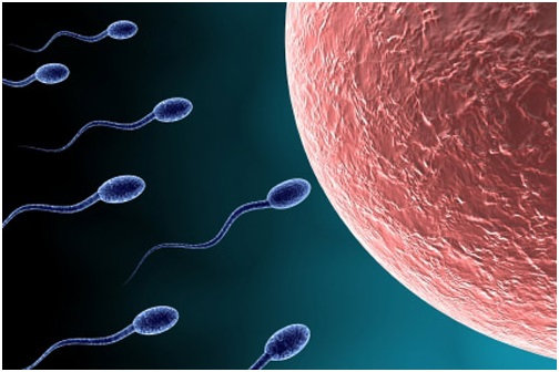 Quá trình thụ thai xảy ra như thế nào?